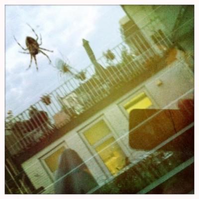 Spin in het web, een saaie metafoor